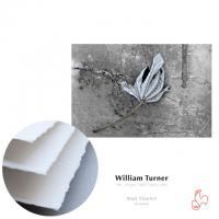 Hahnemühle William Turner 310g, DIN A2, 25 Blatt, mit gerissenem Büttenrand